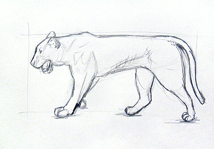 Drawn animl Draw to animals learn draw