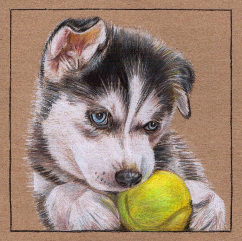 Drawn husky mei  Puppy Husky [Archive] WetCanvas
