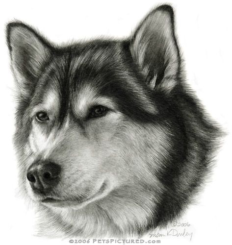 Drawn husky adorable Drawing Pinterest images best 156