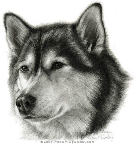 Drawn husky mei  best Pinterest 156 RD
