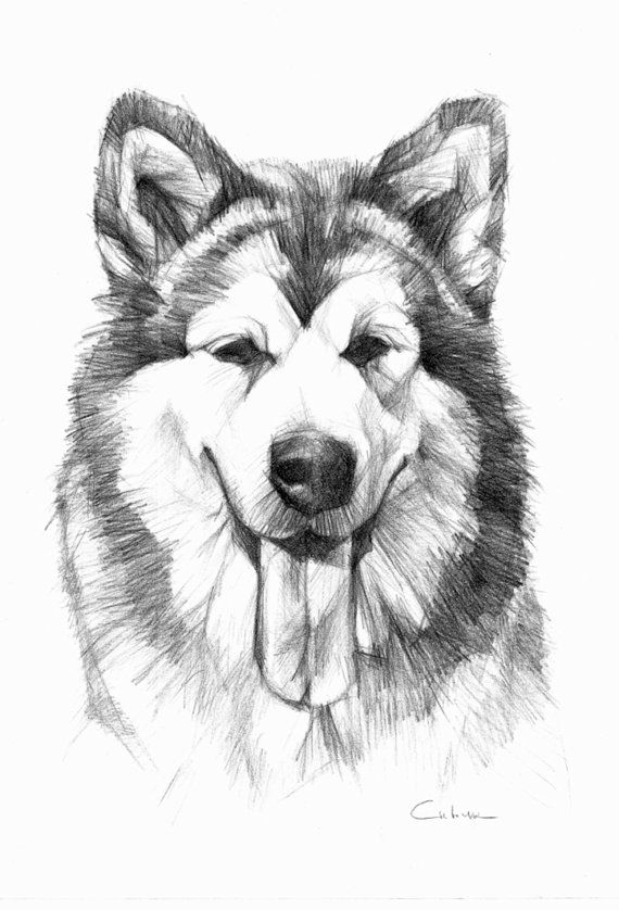 Drawn husky awesome dog Alaskan images best a 15