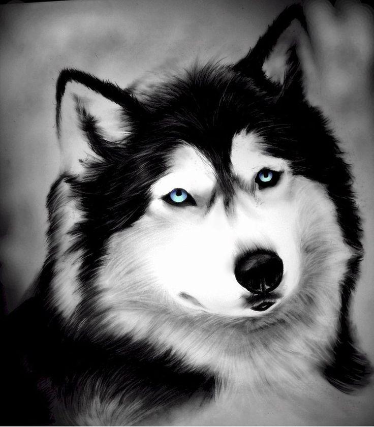 Drawn husky awesome dog  husky siberian images Pinterest