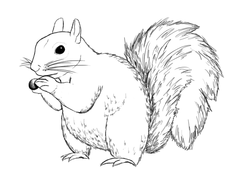 Drawn rodent simple Squirrel A and To Squirrel