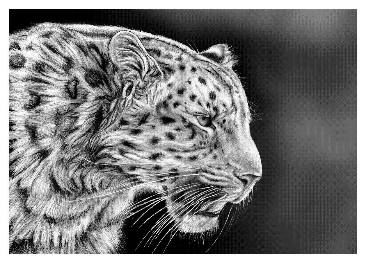 Drawn rhino realistic Leopard Baby Drawing Leopard drawing