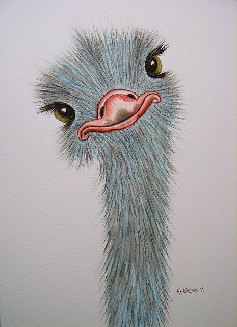 Drawn animl color Pinterest Flickr on · DrawingsDrawing
