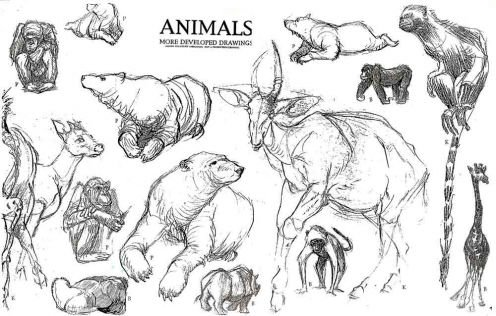 Drawn animl animation  Drawing drawings) Animation Animals:
