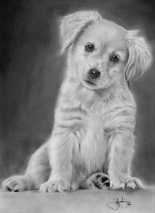Drawn animal graphite drawing #15
