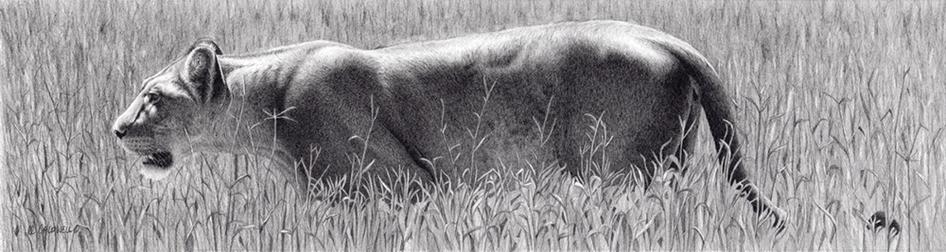 Drawn animal graphite drawing #6
