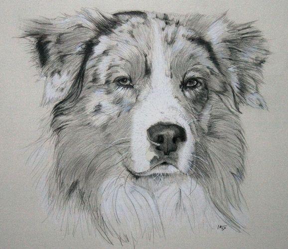 Drawn animal graphite drawing #8