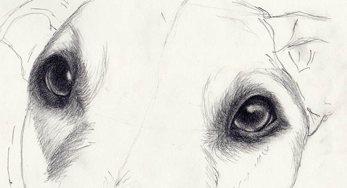 Drawn pug line drawing Eyes Dog Look How Realistic