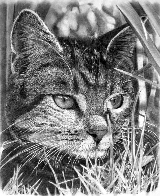 Drawn animal graphite drawing #11