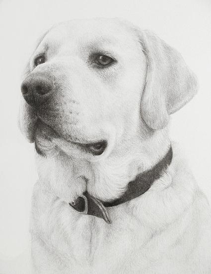 Drawn animal graphite drawing #10