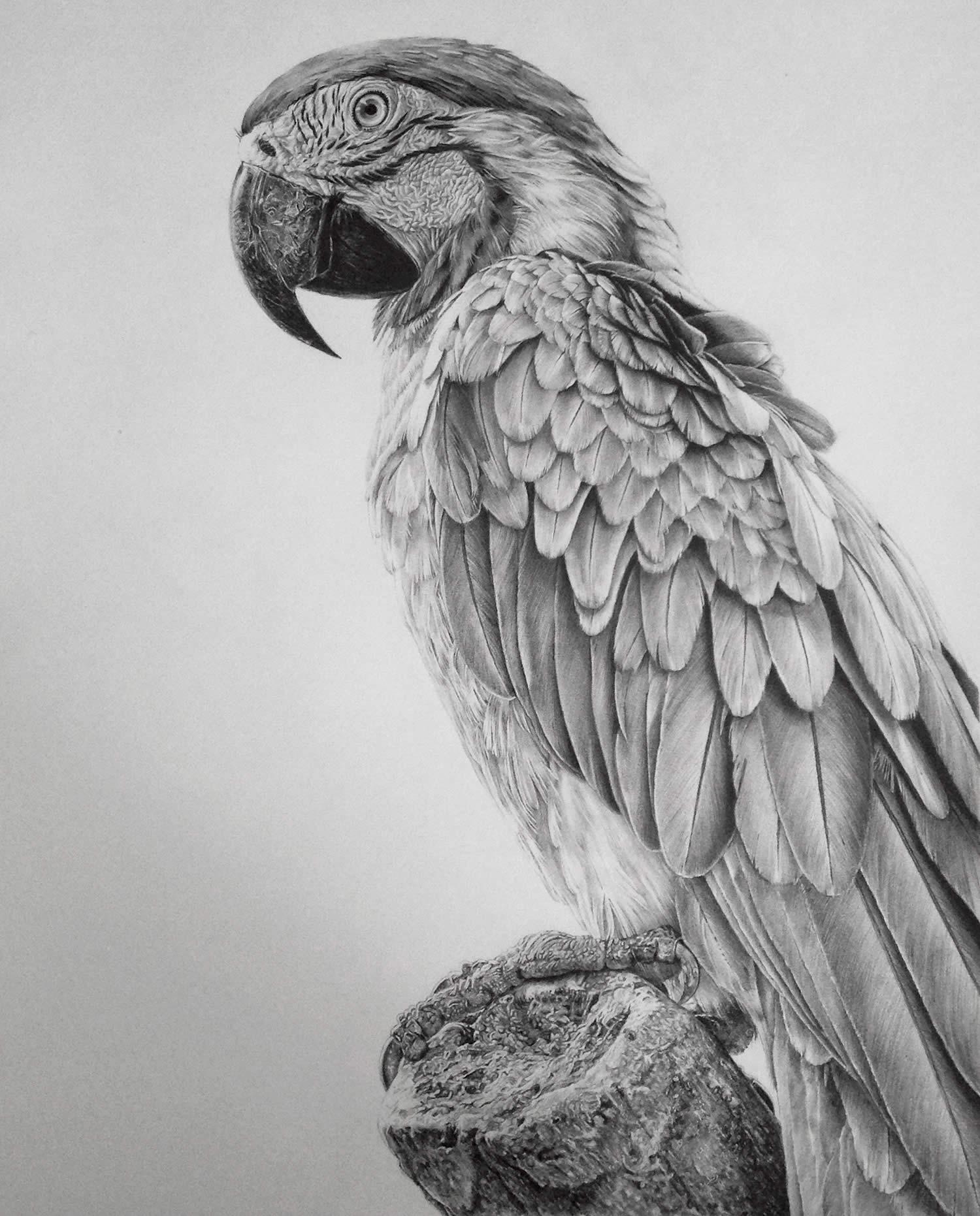 Drawn animal graphite drawing #14