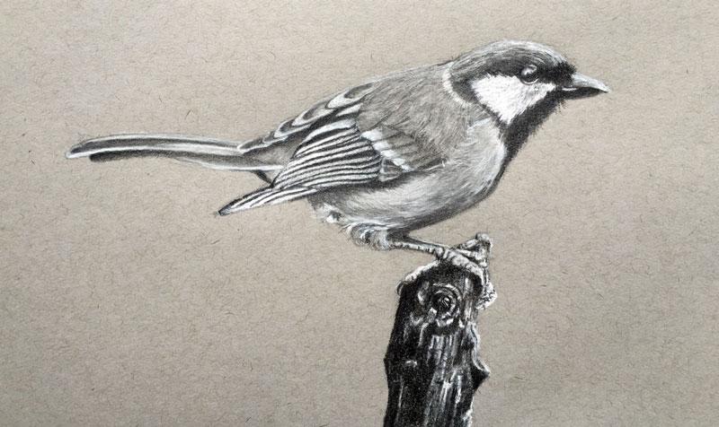 Drawn animal graphite drawing #7