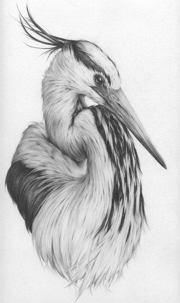 Drawn animal graphite drawing #5