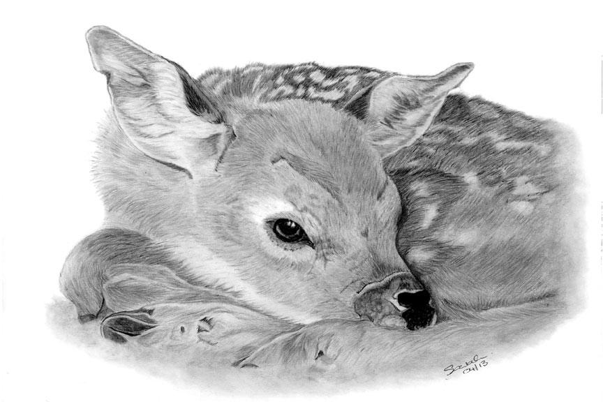 Drawn animal graphite drawing #12