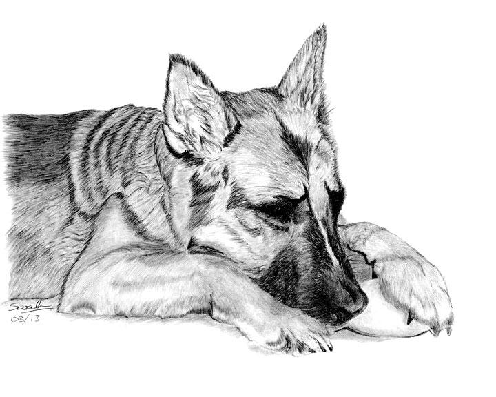 Drawn animal graphite drawing #9