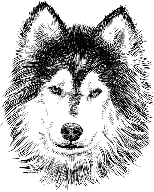 Drawn animal husky #14