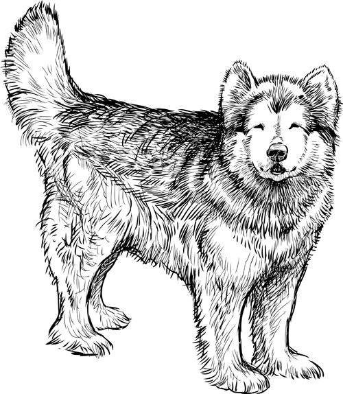 Drawn animal husky #15