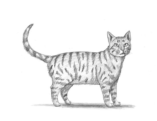 Drawn animal kitten #13