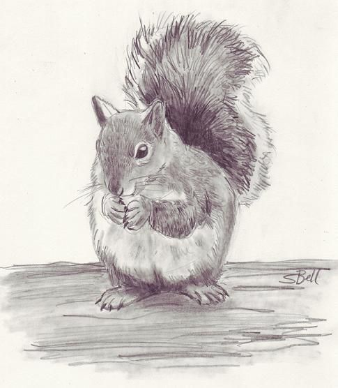 Drawn rodent pencil drawing How animals a  ones