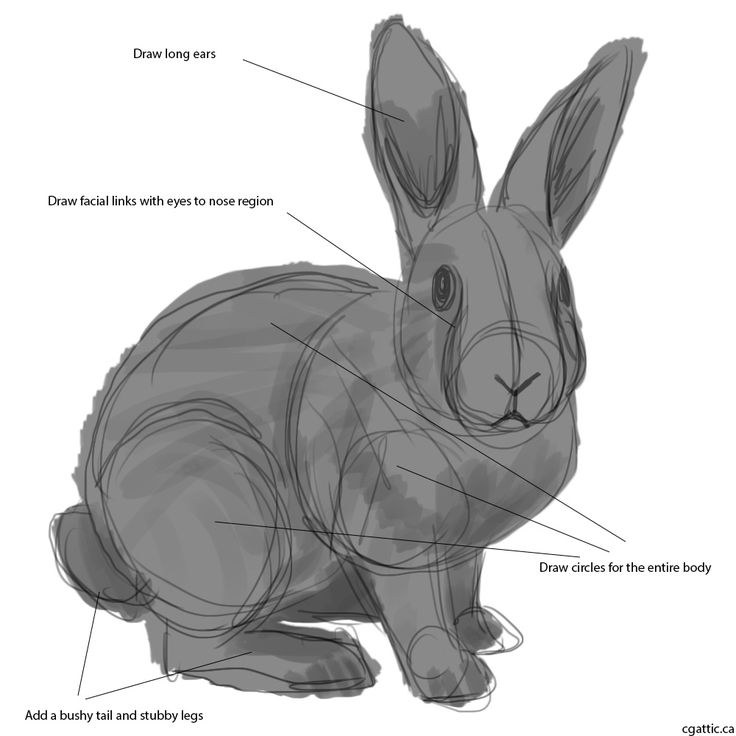 Drawn rabbit rabbit eye On Creating by Best Step
