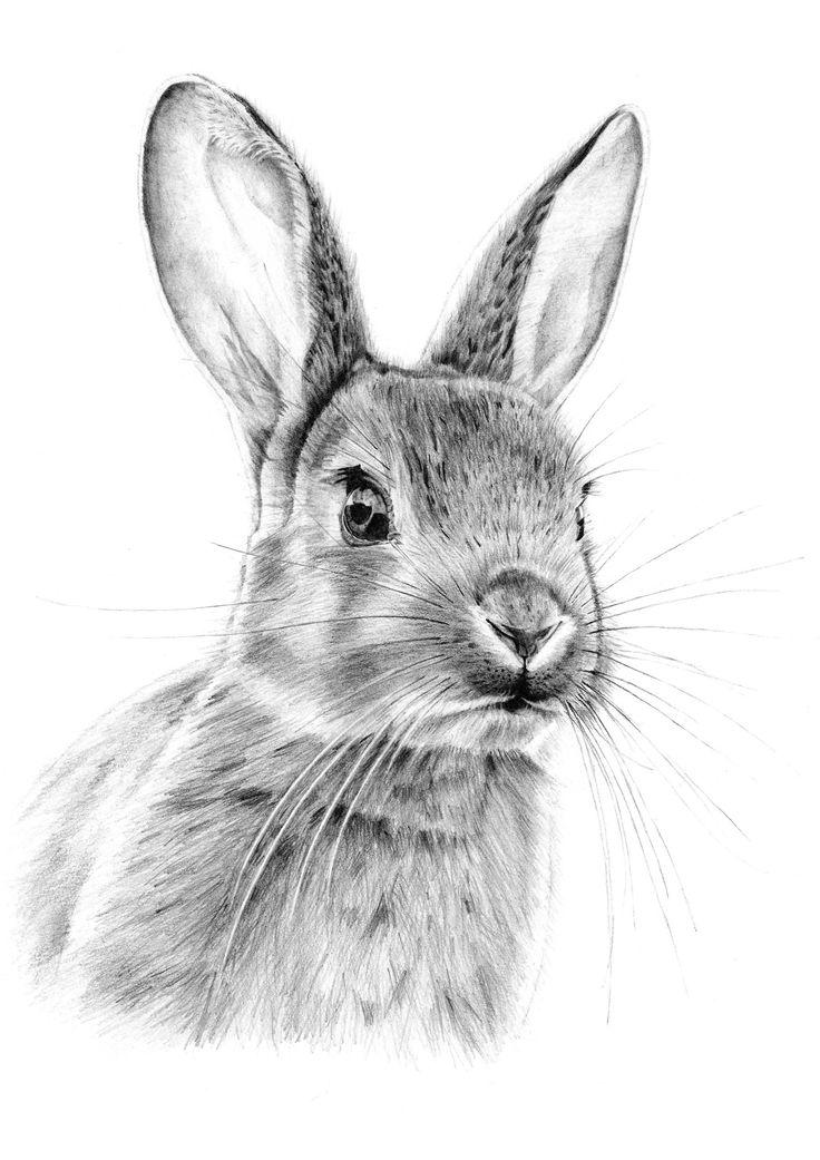 Drawn bunny pencil Pencil Pinterest  25+ Best