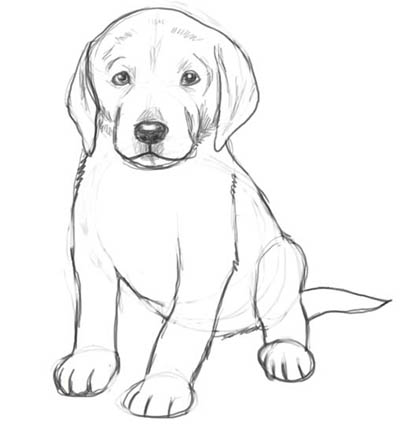Drawn puppy cool dog Drawings In Page In Sketch