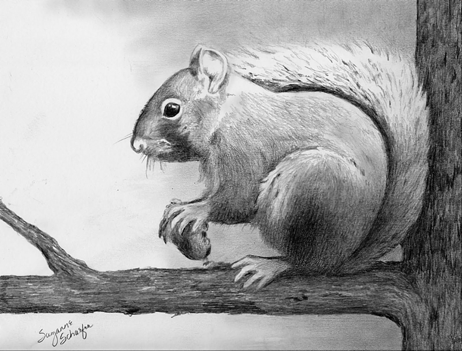 Drawn rodent pencil drawing Drawings Cool Draw art Collections: