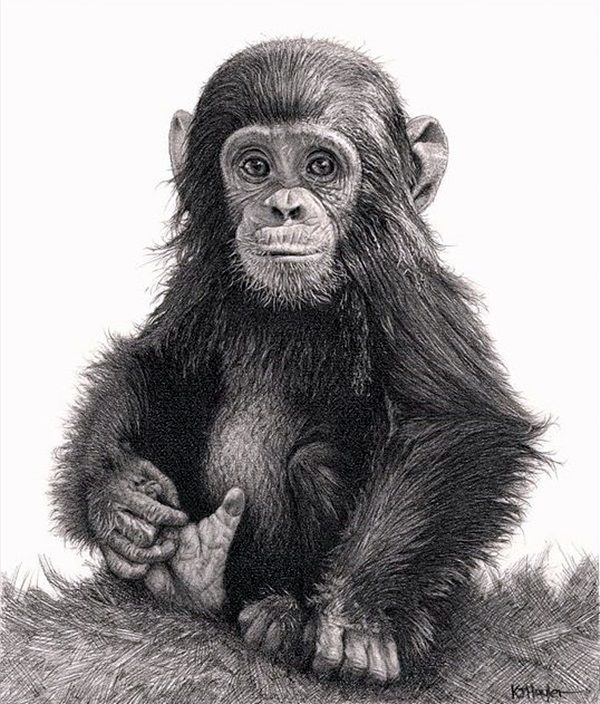 Drawn still life jewelry Choses Monkey ideas Pencil art