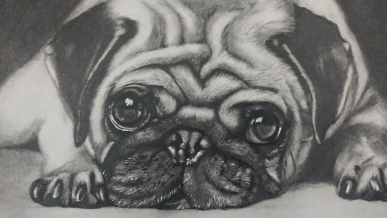 Drawn pug draw a Pug Dog Drawing a Art