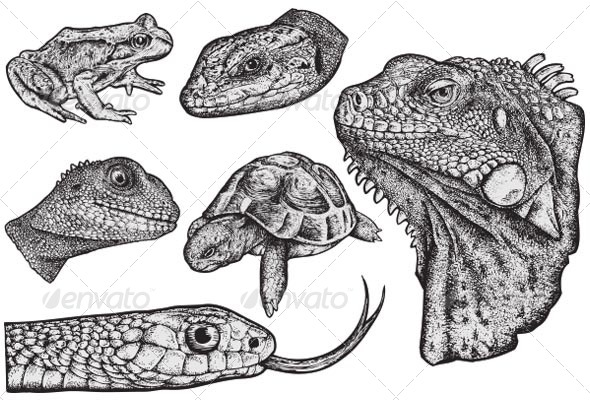 Drawn snake hand drawn Reptiles BusOne GraphicRiver Drawn Drawn