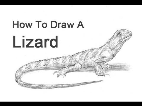 Drawn reptile pencil drawing Lizard YouTube  a to