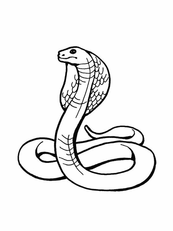 Drawn reptile rainforest animal Rainforest Snakes Coloringpages Coloring Rainforest