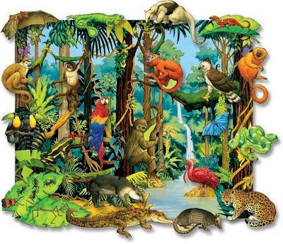 Drawn rainforest tropical rainforest biome Tropical this animals biome rainforest