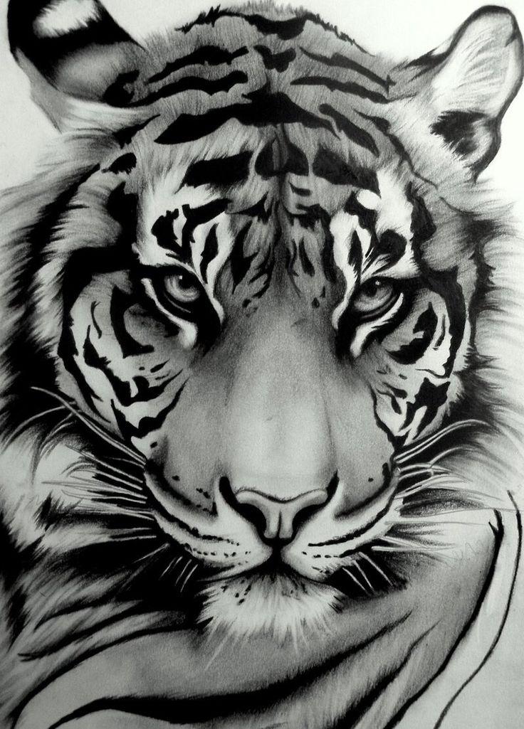 Drawn animal white tiger #10