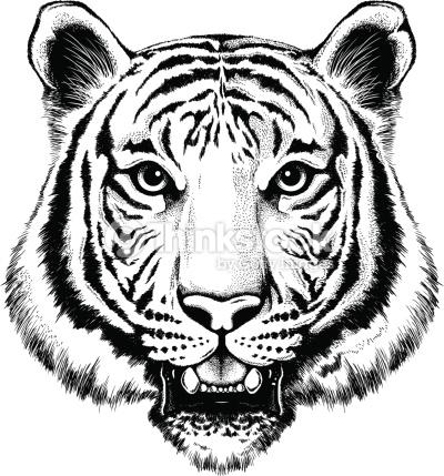 Drawn tigres portrait Tiger White of Tiger