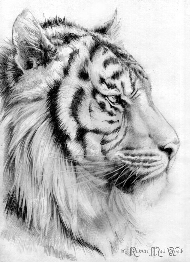 Drawn animal white tiger #11