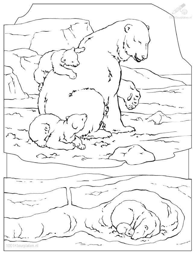 Drawn polar  bear arctic animal #9