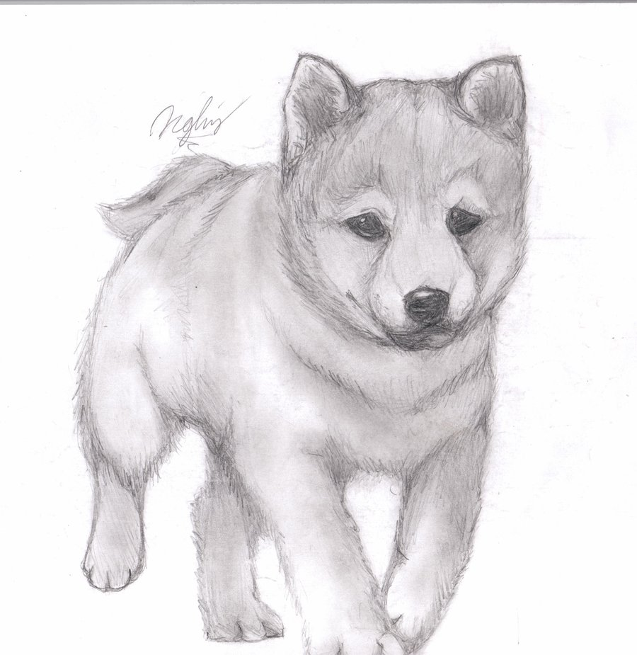 Drawn puppy pencil sketch Pencil Drawing Drawing by Like