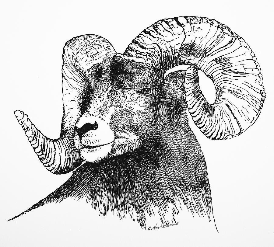 Drawn horns Sheep Sheep and Sheep Big