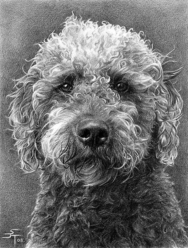 Drawn still life art 40 pencil Realistic Drawings Animal