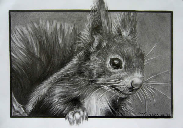 Drawn rodent awesome 50 Squirrel jpg