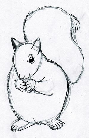Drawn squirrel furry animal Drawings Drawings Drawing Animals
