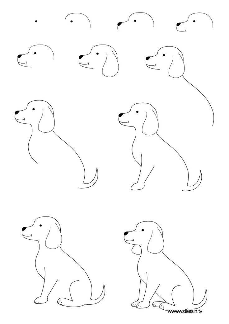 Drawn puppy simple Step by a drawing Dog