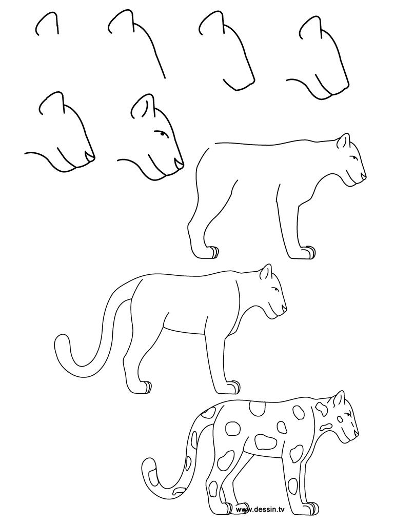 Drawn jaguar easy Drawing by Step Animal Jaguar