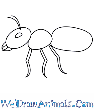 Drawn ant #1