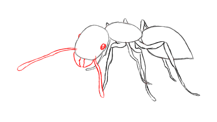 Drawn ant #15