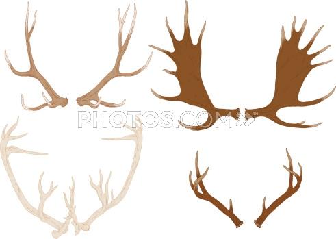Drawn antler Antlers Stock Elk Four Hand