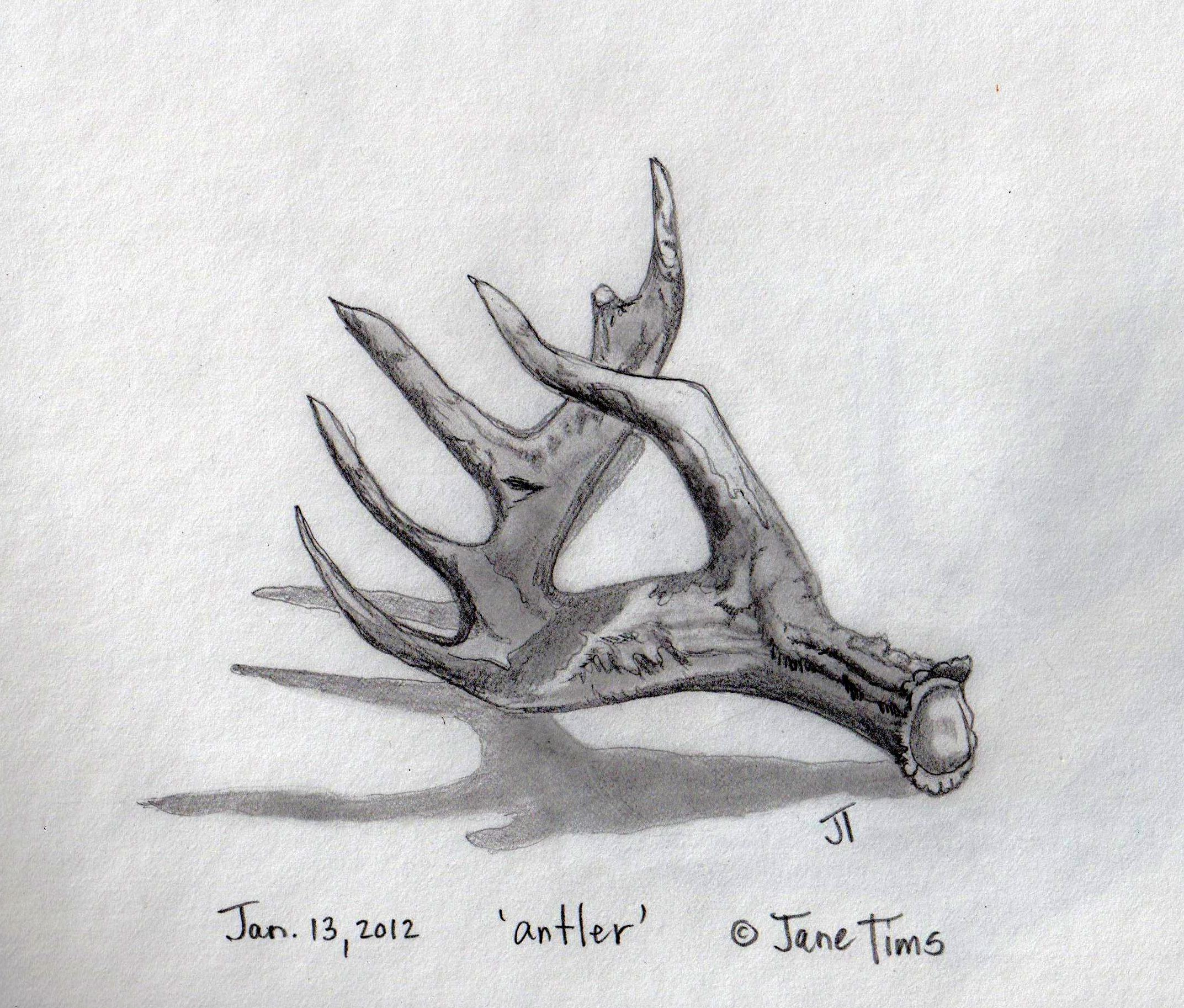 Drawn antler Antler to of bony to